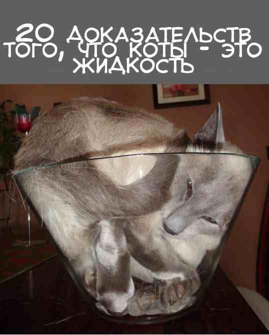 Коты в жидкой форме