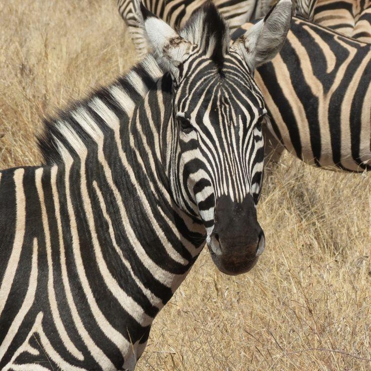 Makalali reserve, South Africa , photo, Annelle Barnett