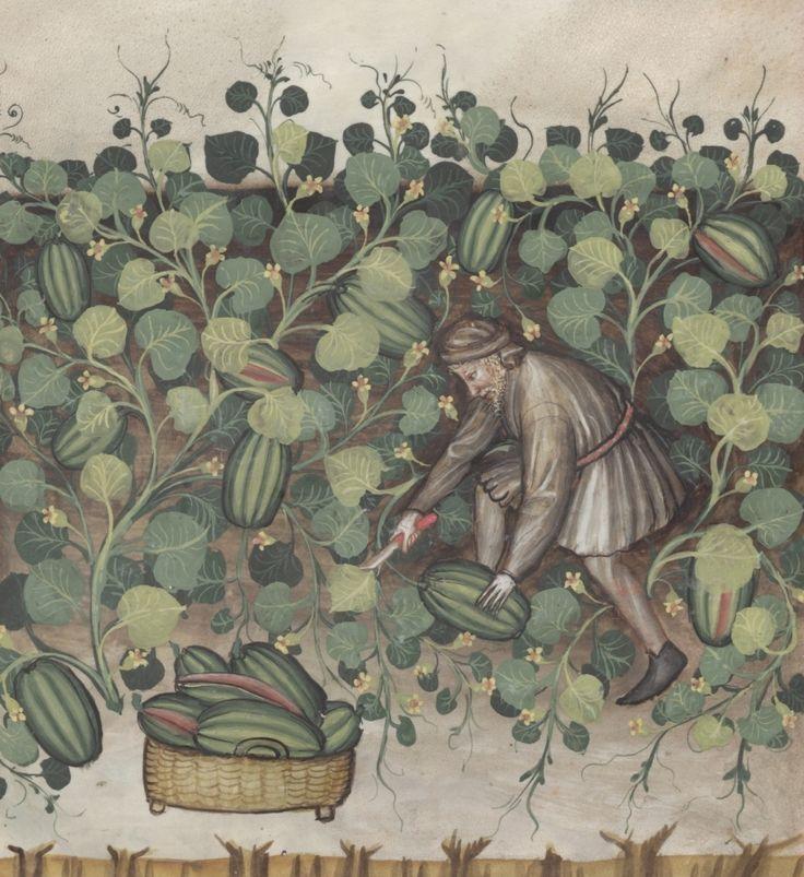 A man during the watermelon crop - Melones | Österreichische Nationalbibliothek - Austrian National Library | Public Domain