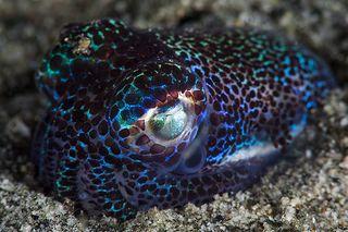 Bobble Shrimp | Flickr - Photo Sharing!