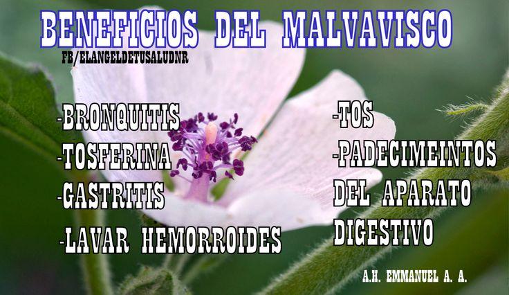 BENEFICIOS EL MALVAVISCO