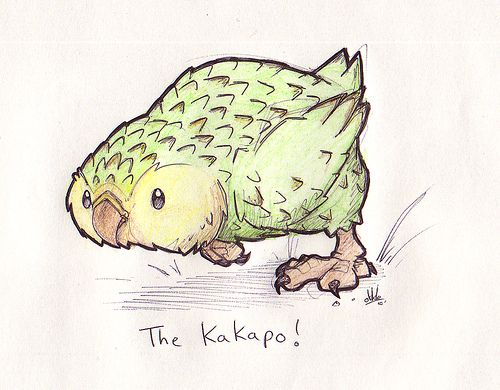 The Kakapo by Okkle, via Flickr - It's just too cute! <3