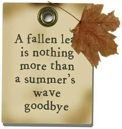 Merveilleux Funny Fall Quotes And Sayings   Google Search