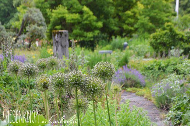Apricot-, Kupfer-, Cafe- und Bronzetöne im Garten mit Beetplan in Kombination mit Violett und Purpur <3 Mit Bildern aus dem Botanischen Garten Augsburg im Juli, Sommer.