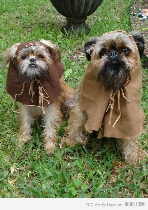 I always thought shih-tzu's look like Ewoks...: Puppies, Dresses Up, Halloween Costumes, Dogs Costumes, Stars War, Shihtzu, Pet Costumes, Shih Tzu, Starwars