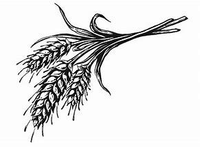 Image result for black and white wheat bundle clipart ...