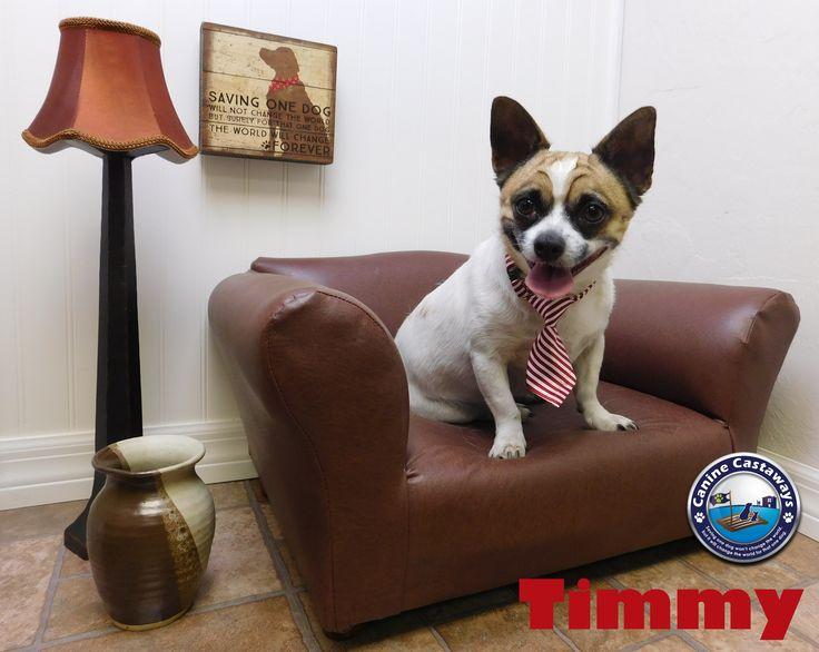 French Bullhuahua dog for Adoption in Arcadia, FL. ADN-519936 on PuppyFinder.com Gender: Male. Age: Adult
