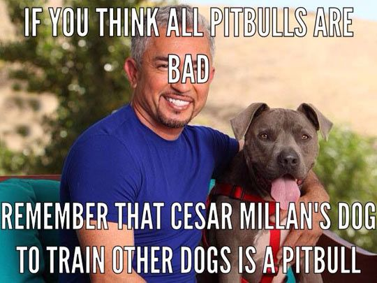 "I'll say this again and again until the pit bull owners listen.  Pit bulls aren't ""bad"".  But, the killing instinct isn't far beneath the surface.  Trip over the right triggers, and a pet turns into a biting animal that inflicts horrible wounds.  They don't mean to do it, it's just what instinct tells them to do in certain circumstances.  Even adults have died needlessly because someone didn't take those instincts seriously."