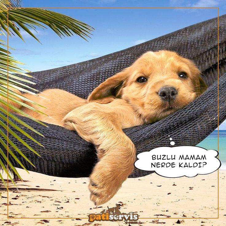 Bu sıcak Pazartesi gününü tatilde geçirenleri kıskanmadan edemiyoruz. Hepinize mutlu bir hafta dileriz <3 Patiservis.com