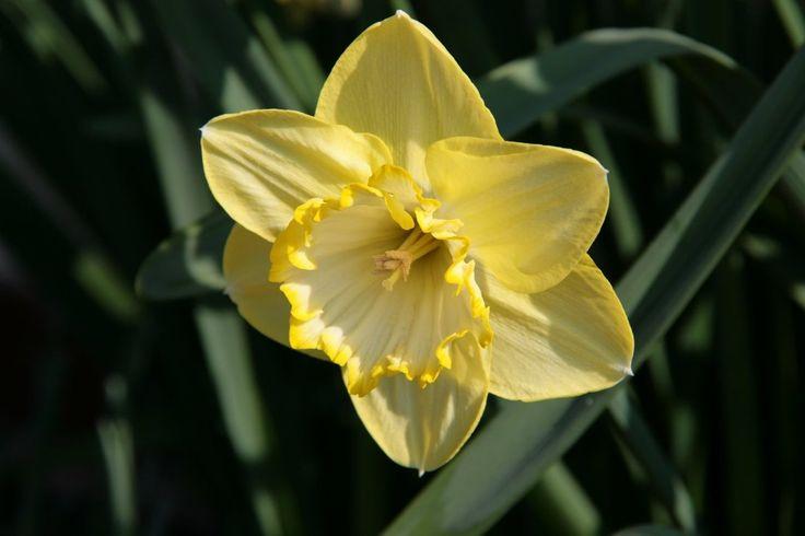easter flowers melbourne