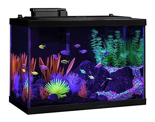 Tetra Aquarium Kit, 20 gallon, Glo-Fish Tetra http://smile.amazon.com/dp/B013BXE1XO/ref=cm_sw_r_pi_dp_WqwRwb0SCSE27