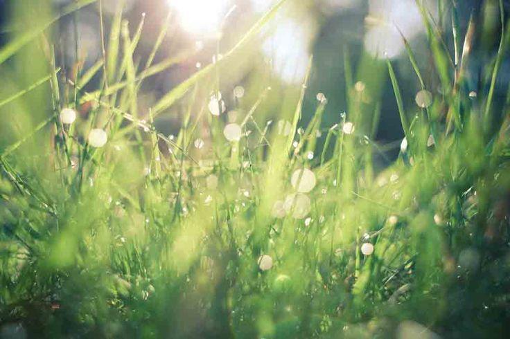 Comme tous les végétaux, les herbes de votre gazon ont un besoin impératif de certains éléments. Ce sont l'eau, l'air, la lumière et les éléments nutritifs. Ces quatre éléments sont indispensables au quotidien, ils permettent aux herbacées de grandir et d'être en bonne santé. L'entretien pelouse ser