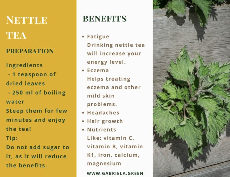 5 Amazing Benefits Of Nettle Tea - www.gabriela.green