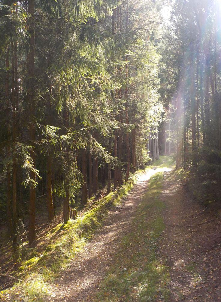 Blaník forest (Central Bohemia), Czechia