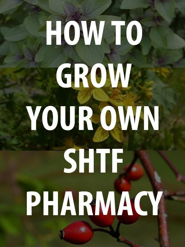 How to Grow Your Own SHTF Pharmacy