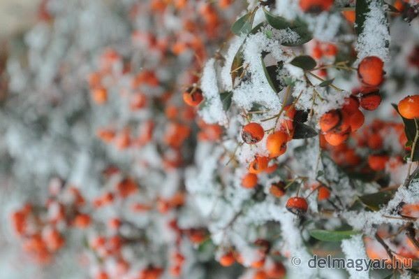 Winter by Szeged, Hungary
