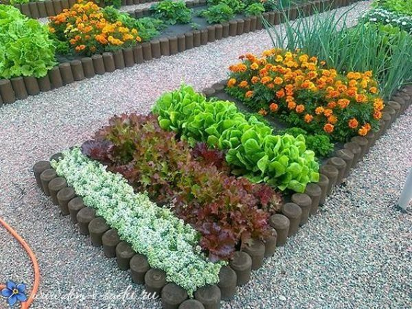 45115b09a2759a8479b69f2c852e7dbd Raised Vegetable Gardens Garden Designs Ideas on landscaping ideas for front flower gardens, gardening ideas for small gardens, raised vegetable planters, raised vegetable beds, landscape design ideas for vegetable gardens,