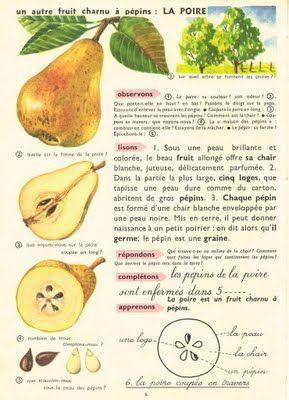 Leçon de choses : la poire