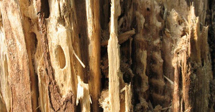Cómo preparar cebos para termitas con ácido bórico. Las termitas son una plaga molesta y destructiva para una casa. Se alimentan de madera, papel, y plantas, y pueden atacar partes estructurales de madera como los cimientos o el piso. El ácido bórico es una sustancia natural que se extrae directamente de la tierra. Es tóxico para las termitas, ataca su sistema nervioso y finalmente las extermina. ...