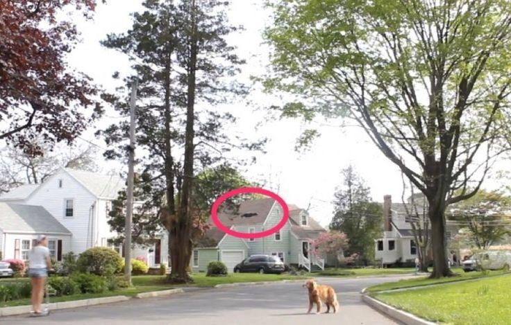 Σκύλος πάει βόλτα με το Drone;  [Video]