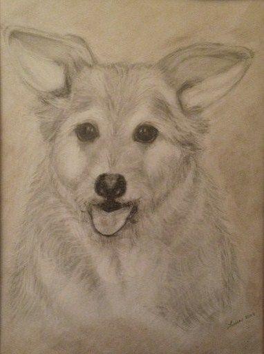 My drawing of my Husband's dog Brandi