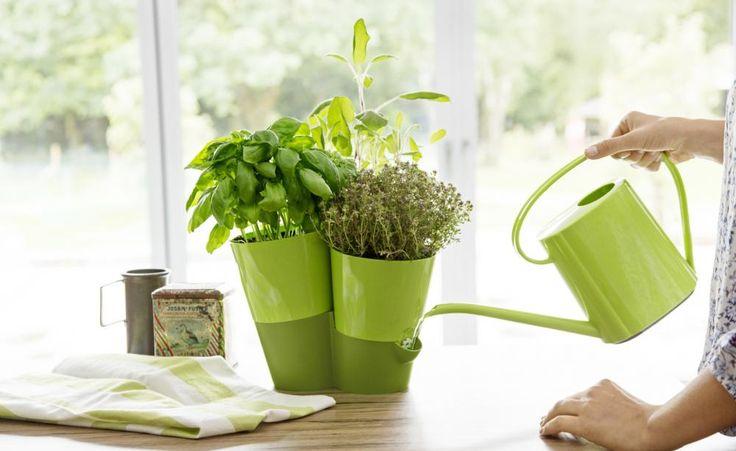 Mit den Kräutertöpfen 'Fresh Herbs' von Emsa versorgt sich die Pflanze, dank eines speziellen Bewässerungssystems, selbst