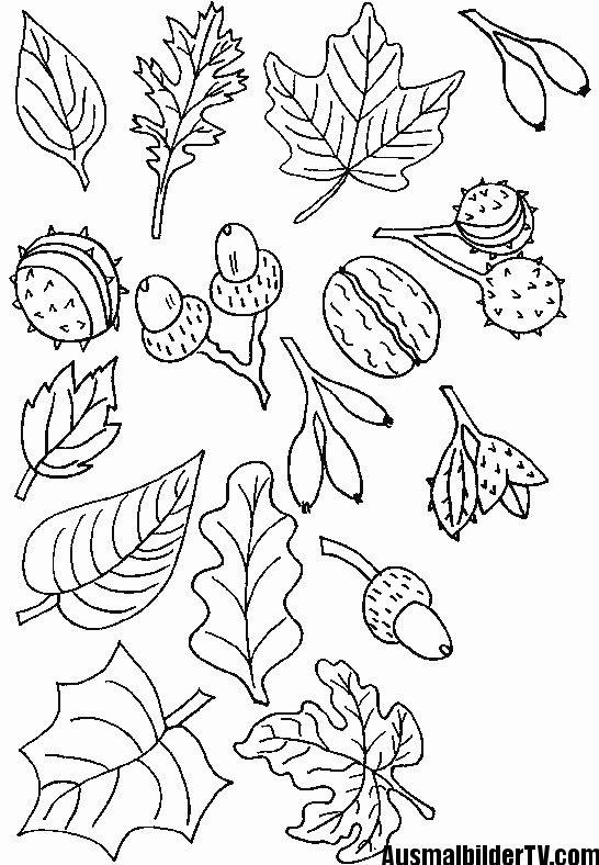 Herbst Ausmalbilder Zum Ausdrucken Malen Und Zeichnen