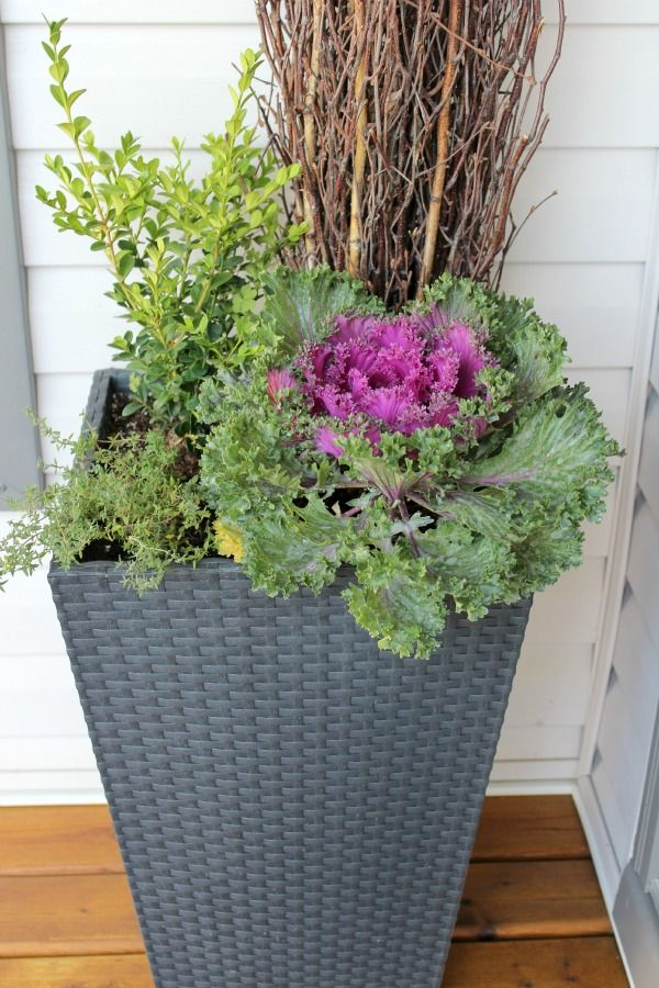 Fall-Planter (branches, boxwood, ornamental kale)