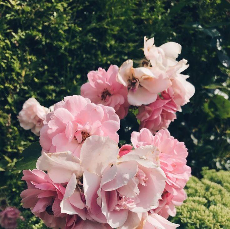 Rose pink green garden summer En Happy tjej Blogg