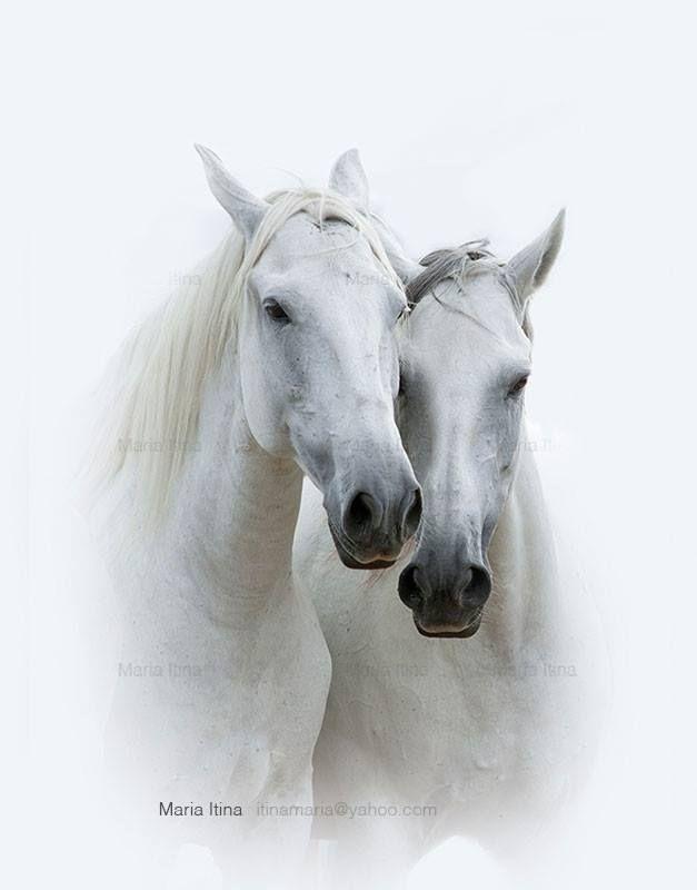 Pin By Ankaxj On Konie Horses Beautiful Horses Animals