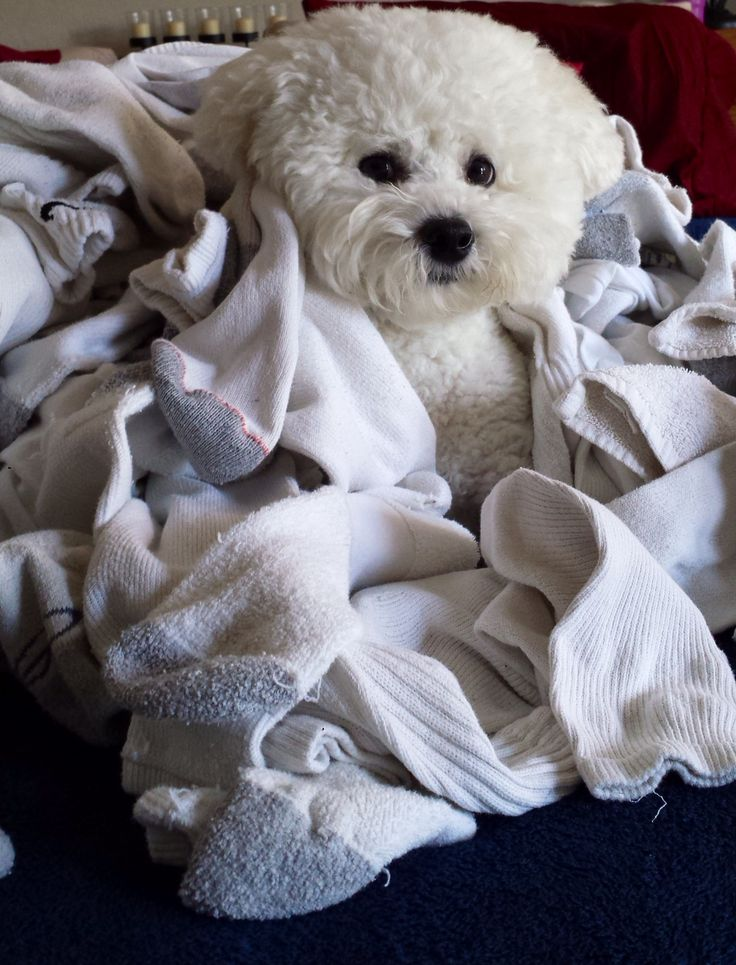 Sock Heaven! This is what I want to do today...curl up in a huge pile of clean warm socks!!