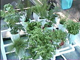 17 Best ideas about Hydro Gardens on Pinterest Diy hydroponics
