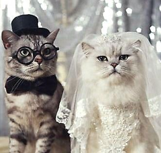 cat wedding Themarriedapp.com hearted <3                              …