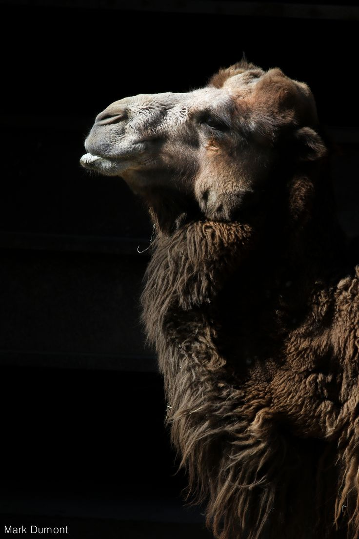 17 Best Images About ONe HUmP R TW On Pinterest Morocco Abu