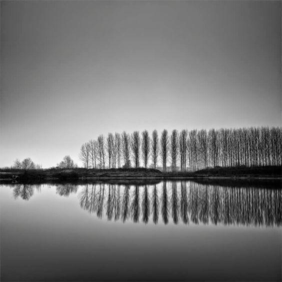 """Pierre Pellegrini, """"Trees"""""""