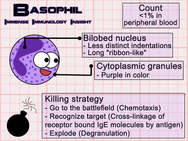 240 best images about Immunology on Pinterest | Mast cell ...