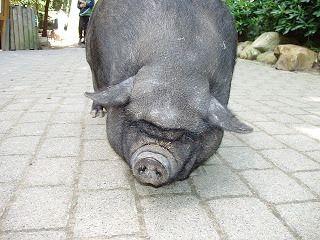 Wilhelm Rupert Frieling, Wenn schwarze Schweine träumen
