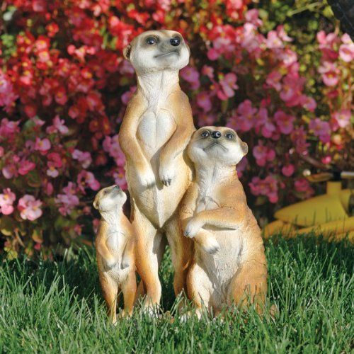 The Meerkat Family Statue by Design Toscano. $29.95. Cast in quality designer resin. Design Toscano exclusive. Hand painted. QL56971 This charming family of meerkats comes straight from the Kalahari Desert to charm in your own manor! With masked eyes and fawn-hued fur, these social and generous animals will greet guests with nearly life-sized realism. This fun-loving work of decorative art is sculpted 360-degrees, cast in quality designer-resin, and hand-painted to rep...