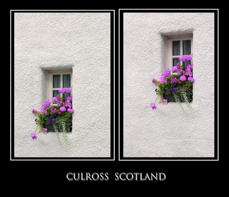 Two Windows With Geranium. Culross. Scotland by Jenny Rainbow