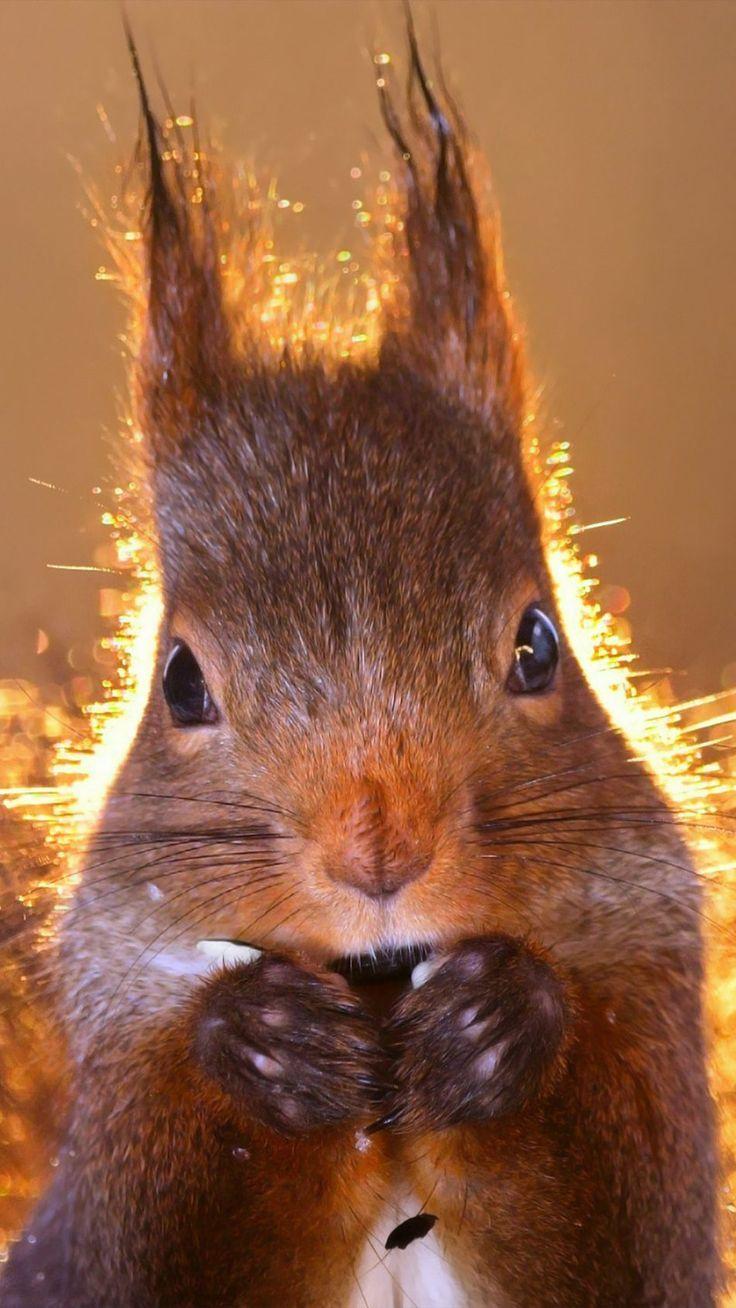 Squirrel Wildlife Close Click Animal Photography Wildlife Scary Animals Wildlife Wallpaper