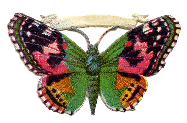 butterfly art images | Free Vintage Butterfly Image - Pink and Green - Scrap - The Graphics ...