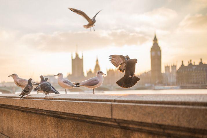 Londen is lekker dichtbij en ook een hele leuke stad om met je date mee naartoe te gaan