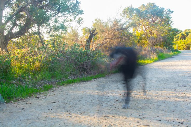 L1M2AP2 Animal in motion ISO200 31mm f/25 0.5sec Ghost dog