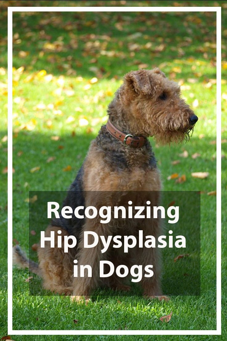 Hip Dysplasia In Dogs What It Is And Some Of The Available