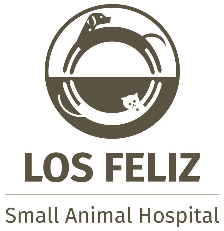 14+ Los feliz small animal hospital images