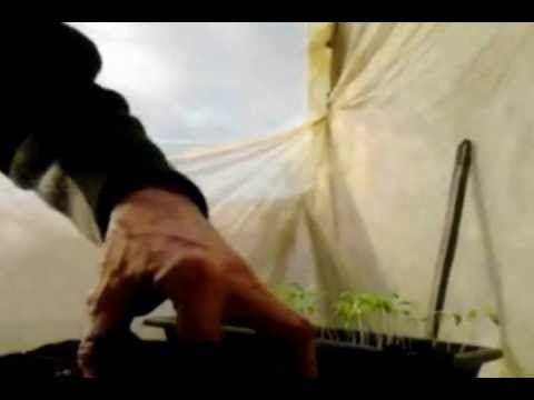 10-astuces-de-maraicher-pour-reussir-vos-cultures-au-potager-biologique par Aurélien