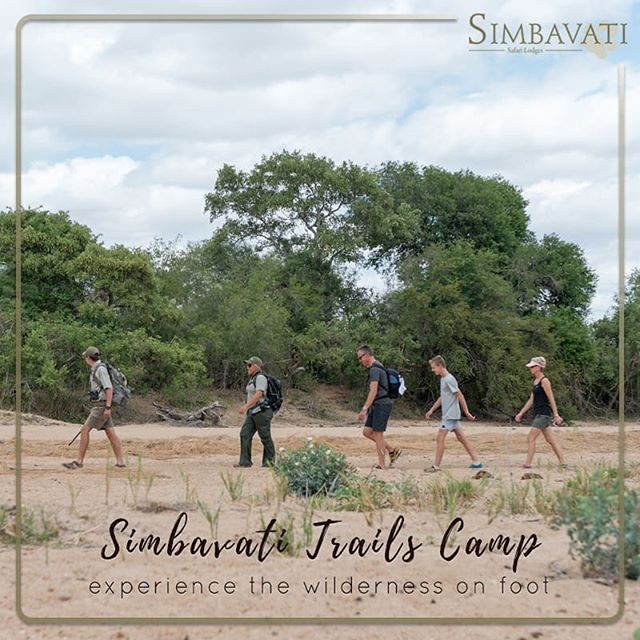 The soon-to-be launched Simbavati Trails Camp offers 4 en-suite Meru-style safari tents and hosts a maximum of 8 guests. Experience the wilderness on foot - with 2 walking safaris per day guaranteed to give you brand new perspective. . . . #Simbavati #Safari #SimbavatiTrailsCamp #New #Launch #Private #Getaway #Experience #Exclusive #Bush #Travel