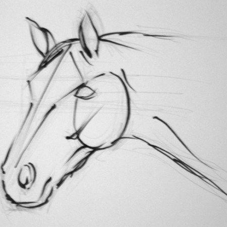 Ms de 25 ideas increbles sobre Caballos a lapiz en Pinterest