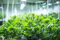 Un projet d'usine de marijuana médicale à Louiseville franchit une autre étape - Métro Montréal