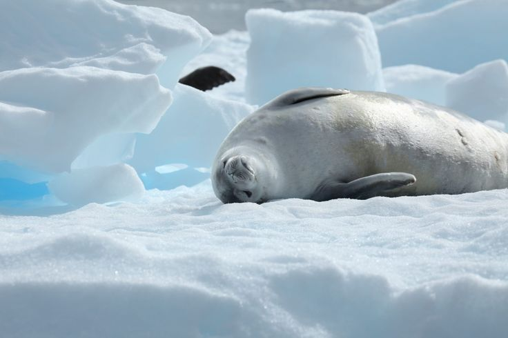 What the World's Largest Marine Preserve Means for Antarctica's Animals – And How You Can Help Too | One Green Planet